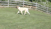 GIRLIE_MOVE_FENCE_ZOOM_S_