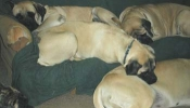 suzetteups
