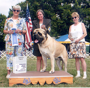 Jules wins his second group 1 at Perkiomen Valley Kennel Club Show August 6th!
